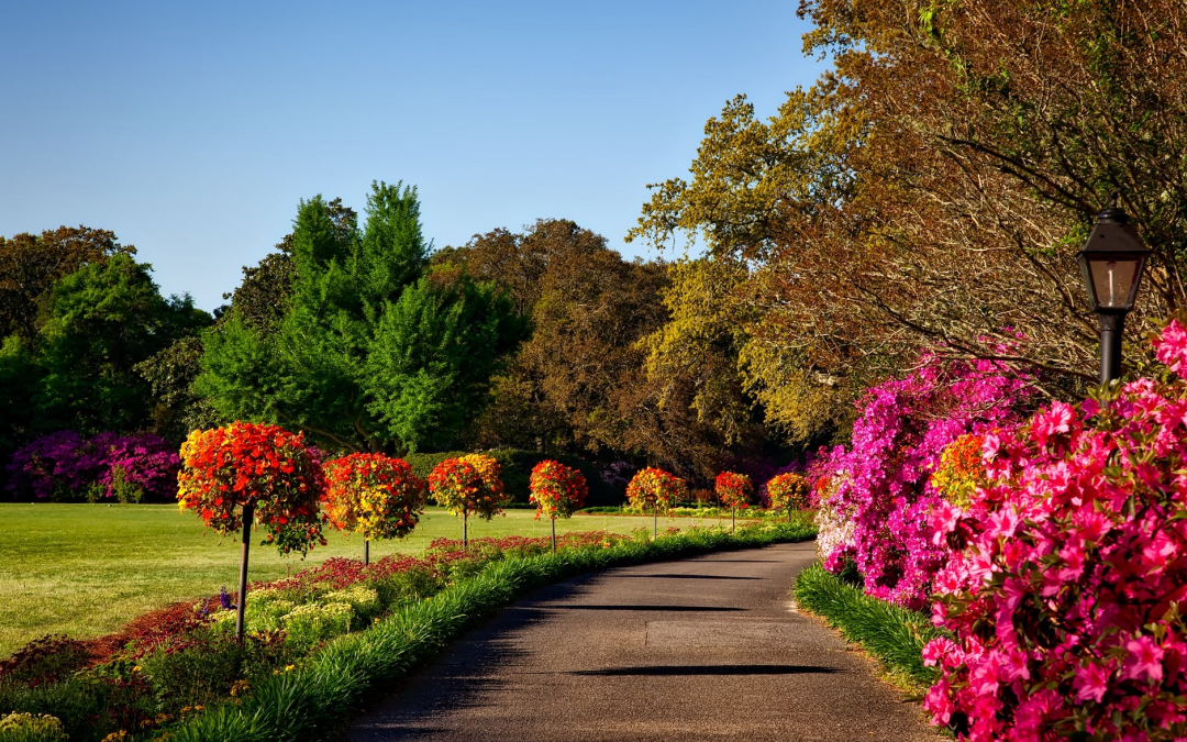 10 Basic Landscaping Strategies For First Time Landscapers